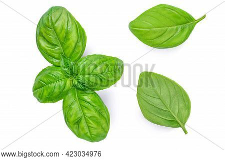Fresh Basil Leaf Isolated On White Background, Close Up. Basil Herb  Top View Set