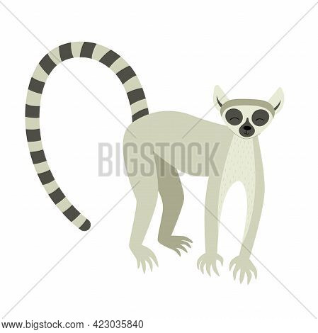 Exotic Cute Lemur. Animals Of Madagascar And Africa. Vector Childrens Illustration In Flat Style