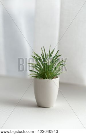 Cactus Plant In Pot On The White Background