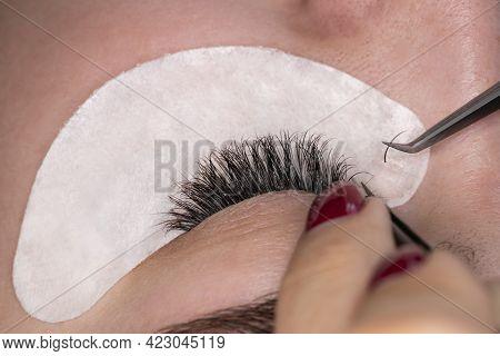 Professional Stylist Lengthening Female Lashes. Master And Client In Beauty Salon. Eyelashes Extensi