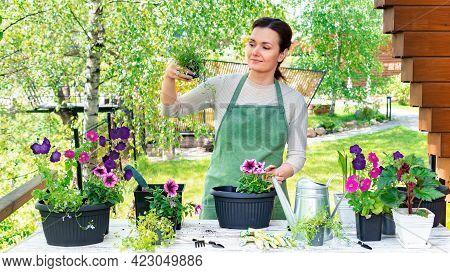 The Woman Gardener In Green Apron At Her Working Desk Transplants Flower Seedlings Into Flowerpots.