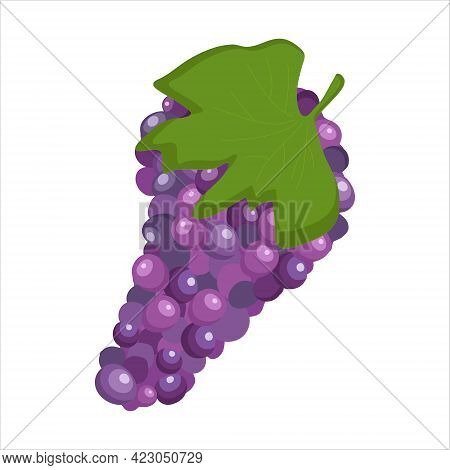 A Bunch Of Ripe Grapes On A White Background For Use In Web Design Or As A Print
