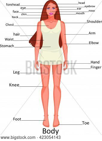 Diagram Of The Human Body Parts On The Girl
