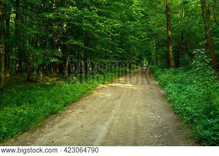 Dirt Road Through A Dense Green Forest, Spring View