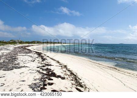 The Empty Sandy Beach Covered With Algae On Grand Turk Island (turks And Caicos Islands).