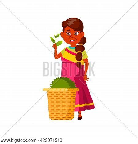 Indian Adult Woman Showing Tea Harvest On Plantation Cartoon Vector. Indian Adult Woman Showing Tea