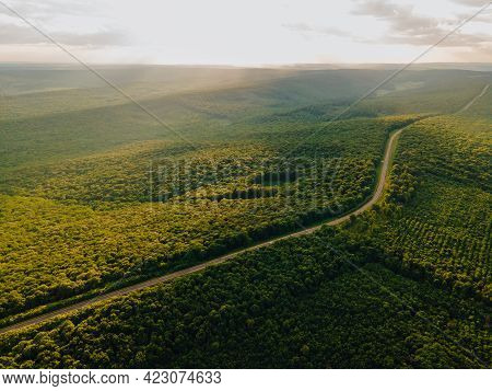 Aerial Flight Over The Road Between Forest At Sunrise. Green Colors. Aerial Of Green Countryside And