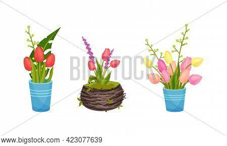 Tulip Flowers Growing In Flowerpot On Garden Bed Vector Set