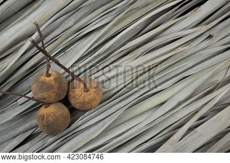 Santol Or Cotton Fruit Flat Lay On Dry Palm Leaves Pattern Texture Background. Tart With Astringent
