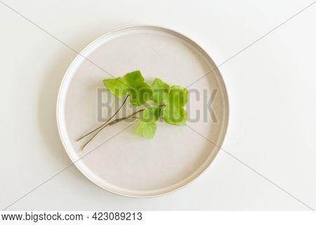 Empty Plate With Leaves Hepatica Nobilis.anemone Hepatica, The Common Hepatica, Liverwort, Kidneywor