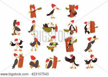 Cute Woodpeckers Set, Funny Bird Character Activity Cartoon Vector Illustration