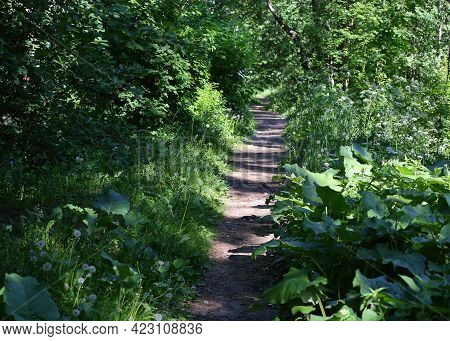 A Sunny Path In The Green Thicket