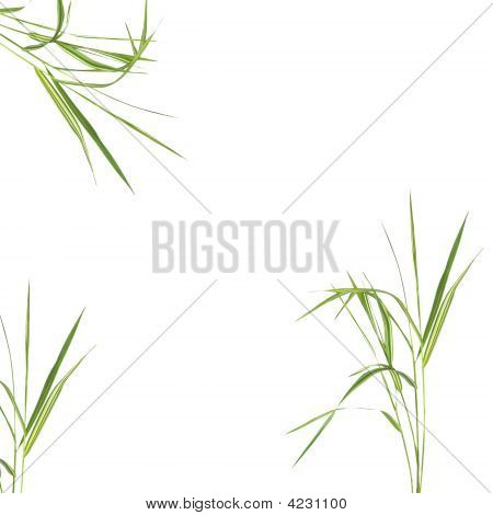 Zen abstract of bamboo leaf grass over white background. poster