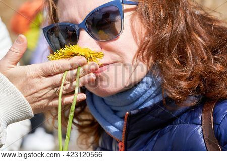 A Woman In Sunglasses Is Sniffing Yellow Dandelion Flowers. The Scent Of Spring Flowers