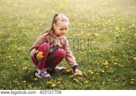 Preschool Girl Collects Dandelion Flowers In Park In Summer. The Child Collects A Bouquet