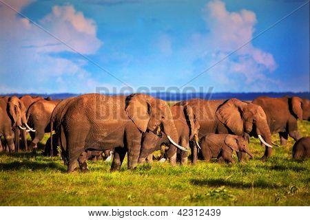 Elephants herd on African savanna. Safari in Amboseli, Kenya, Africa poster