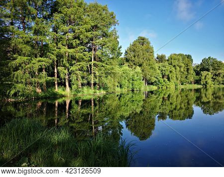Summer Landscape With Lake And Trees. Lake Mirror In The Forest Or Park
