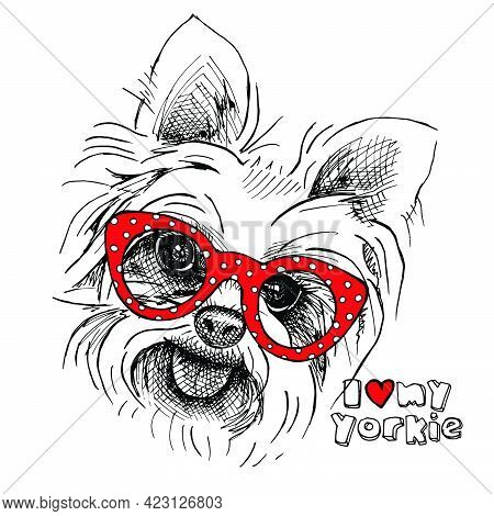 Portrait Of A Dog Yorkshire Terrier With Glasses. Vector Illustration.