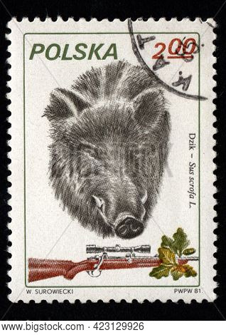 Poland - Circa 1984: Stamp Printed In Poland Showing Wild Boar. Postal Stamp About Wild Boar. Wild S