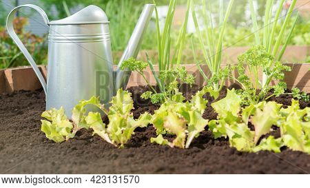 Growing Organic Food On Soil With The Addition Of Vermicompost And Peat Without The Use Of Fertilize