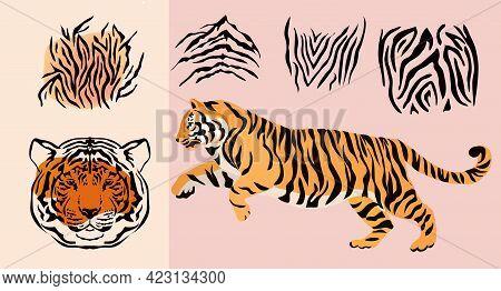Abctract Set Elements  Safari Tiger Animal Prints. Face Head Tiger. Exotic Wild Animal Skin. Safari
