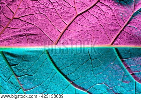 Plant Leaf Close-up With Blue Backlight. Use As Texture Or Background