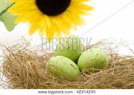 Green Eastereggs in Easter nest with Sunflower
