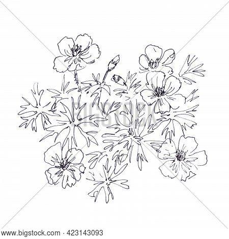 Geranium Pratense ,meadow Crane's Bill, Meadow Geranium, Botanical Sketch, Graphic Black And White D
