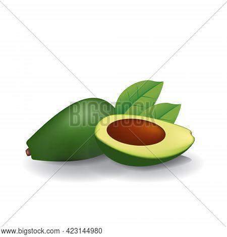 Avocado Healthy Organic Fresh Fruit Summer Isolated Vector Illustration