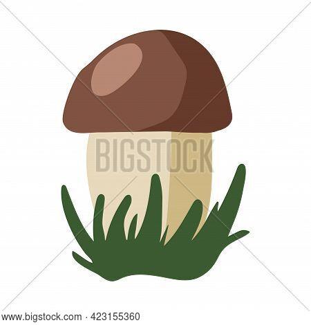 Boletus Mushroom In The Grass Illustration Isolated On White Background. Hand Drawn Art. Vector