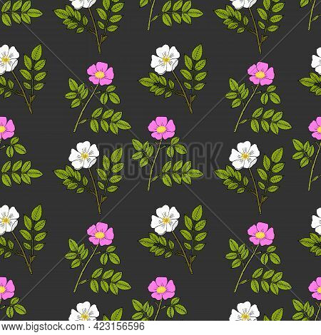 Seamless Pattern With Cherokee Rose And Wild Prairie Rose. Botanical Hand Drawn Vector Illustration