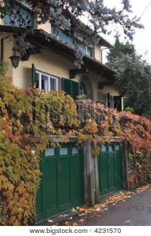Autumn Leaves In Fiesole