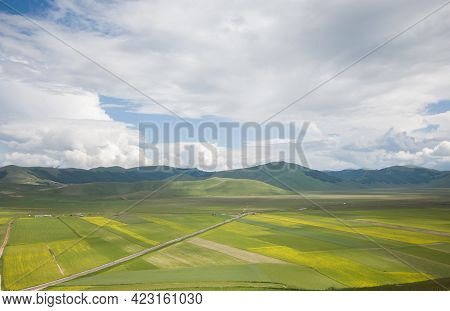 Idyllic View Of Lentils Flowering In The Pian Grande During Spring Day Of June, Umbria, Italy