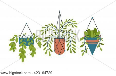 Hanging Decorative Pots With Plants. Interior Geometric Decoration Of Room And Garden. Tropical Gree