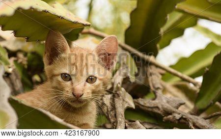 Wild Asian Cat Living Close To Human Habitation But Never Becoming Pets, Doing Extreme Damage To Nat