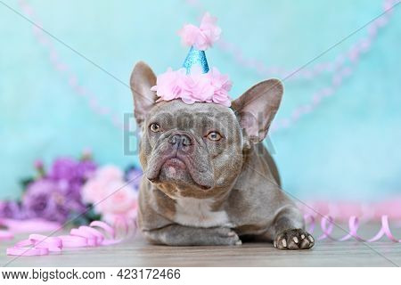 Lilac French Bulldog Dog With Birthday Part Hat Lying Down In Front Of Blue Background With Paper St