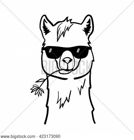 Cute Llama With Sunglasses. Cool Alpaca With Flower In Mouth. Vector Illustration Isolated On White