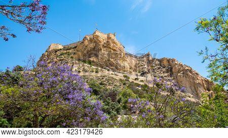 Santa Barbara Castle On Cliff In Alicante, Costa Blanca Region In Spain. Jacaranda Mimosifolia Tree