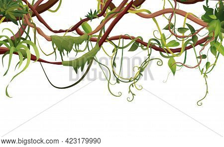 Liana Or Vine Winding Branches With Tropic Leaves Background. Cartoon Vector Illustration. Jungle Tr
