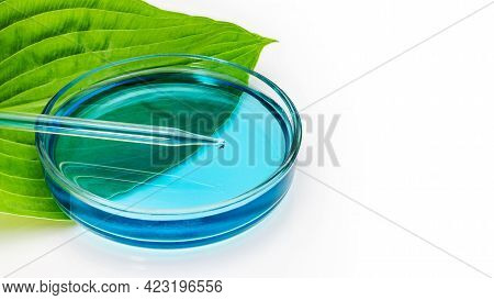 A Glass Petri Dish Stands On A Green Leaf Of A Plant With A Measuring Tube On A White Background. Bi