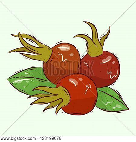 Source Of Vitamin C. Vector Illustration. Rosehip Berries. Ripe Rosehip. Cartoon.