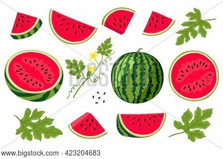Watermelon Vector Illustration. Watermelon, Whole, Sliced, Halves, Slices, Quarters, Seeds, Inflores