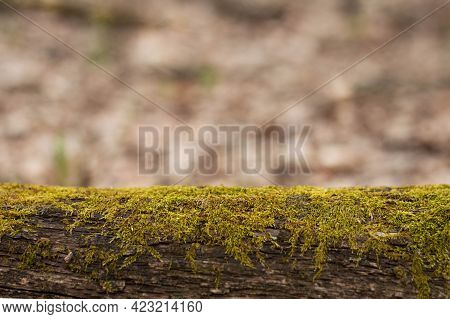 In The Foreground Is A Moss Log, In The Background Is A Blurred Image Of A Forest With Space For Wri