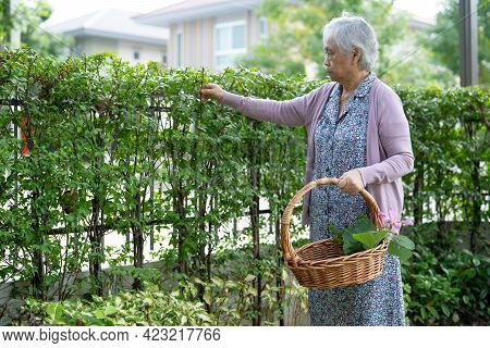 Asian Senior Or Elderly Old Lady Woman Taking Care Of The Garden Work At Home, Hobby To Relax And Ex