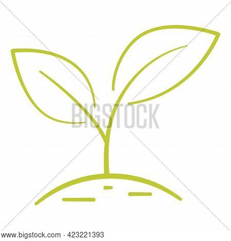 Growing Plant. Two Green Leaves. Environmental Protection Concept, Eco Natural Farm Concept, Earth D