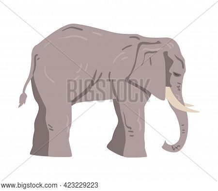 Standing Elephant As Large African Animal With Trunk, Tusks, Ear Flaps And Massive Legs Vector Illus