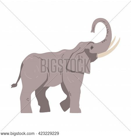 Standing Elephant As Large African Animal With Trunk, Tusks, Ear Flaps And Massive Legs Side View Ve