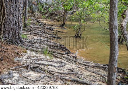 Severe Erosion On The Lake Beach Area Exposing The Tree Roots Closeup View Of The Shoreline On Lake