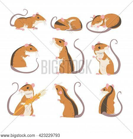 Field Mouse As Small Rodent With Long Tail And Dorsal Black Stripe Vector Set