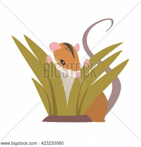 Field Mouse As Small Rodent With Long Tail And Dorsal Black Stripe Vector Illustration